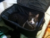 Petter the Cat